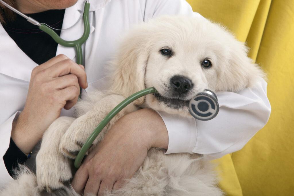 Empaattinen eläinlääkäri alkaa helposti sääliä paitsi potilastaan, myös sen omistajaa. Osa asiakkaista tietää sen –ja käyttää tilannetta surutta hyväkseen!