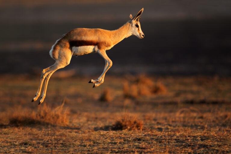 Noste-safari ei sovi asiantuntijoille tai johtajille, jotka juuttuvat saivartelemaan epäoleellisista yksityiskohdista.